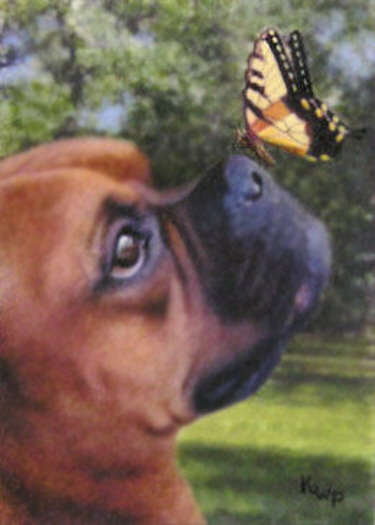 Boxer & Butterfly