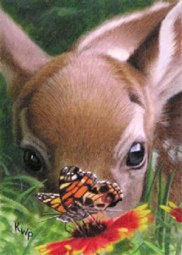 Butterfly Fawn