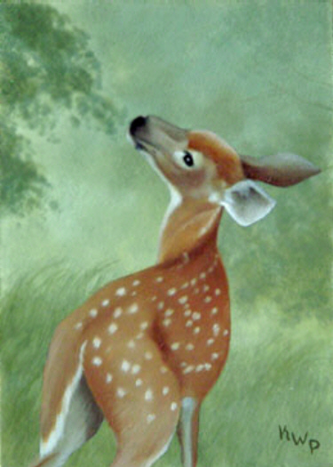 Fawn Misty Morning