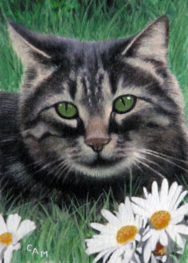 Daisy Cat